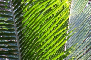Why did the crowd bring palm leaves to Jesus' triumphal entry?